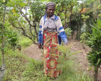 ICRAF and One Acre Fund chart ways forward on trees