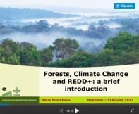 Forests, Climate Change and REDD+: A brief introduction