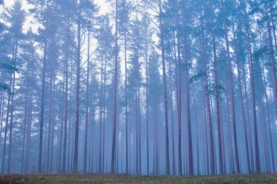 00-01k-our-great-russian-motherland-forests-12-11