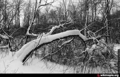 лес Барский