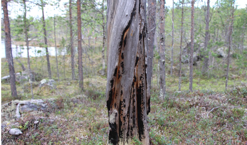 climat et risques de feux de forêts