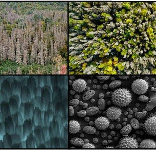 rencontres réseau forêts froides