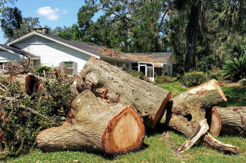 Florida hurricane damaged tree removal