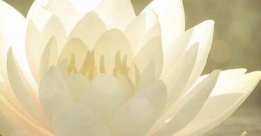 mindfulness rituals