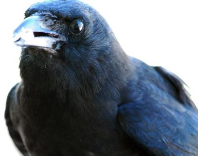 Crow: honors ancestors, supports ethical behavior, moves freely, carries souls from darkness into the light.