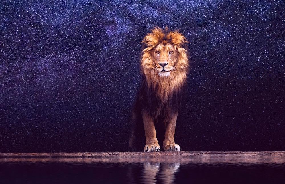 Leo Kingdom | MMKB | FANDOM powered by Wikia