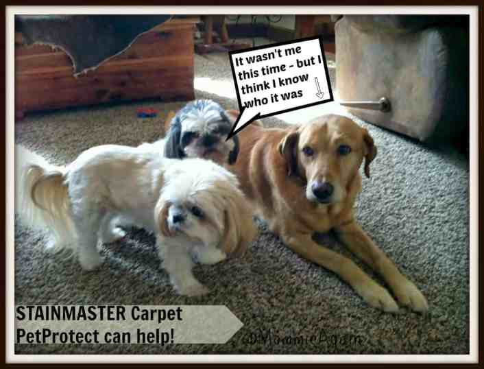 Love Your Pets AND Your Carpet! STAINMASTER PetProtect Carpet System