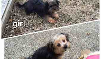 Meet Cyndi & Cody – Our Adopted Puppies!