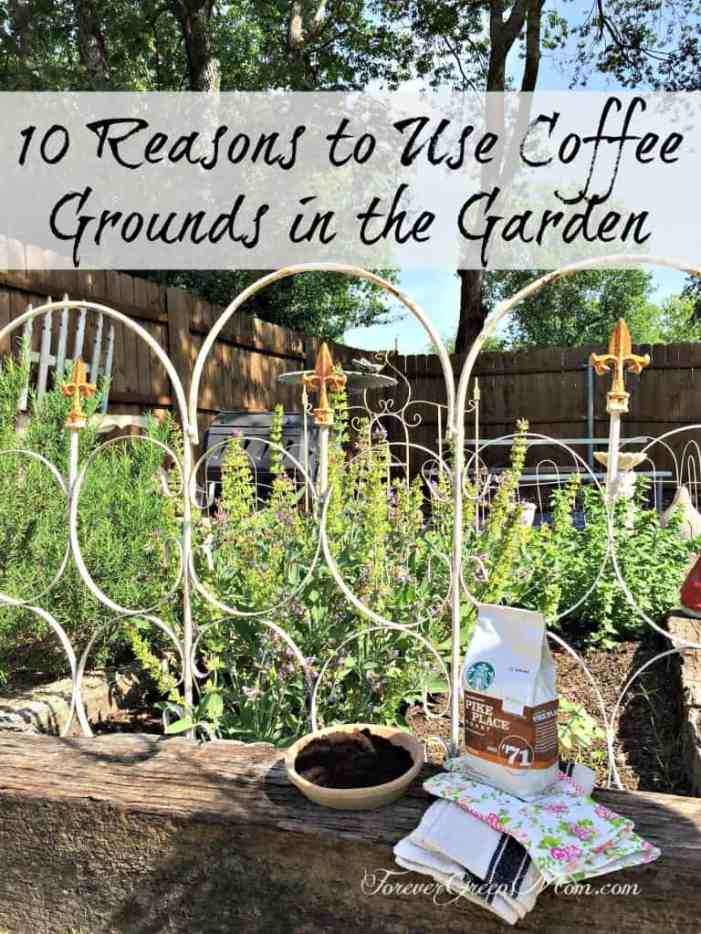 10 Reasons to Use Coffee Grounds in the Garden