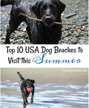Top 10 USA Dog Beaches to Visit this Summer