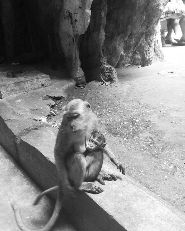 love-monkey-malaysia-batu cave-kuala lumpur