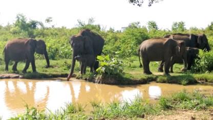 asia-elephant-visit-asia