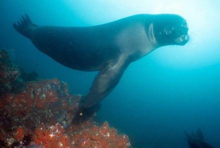 Galápagos-sea-lions
