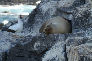 sea-lion-galapagos