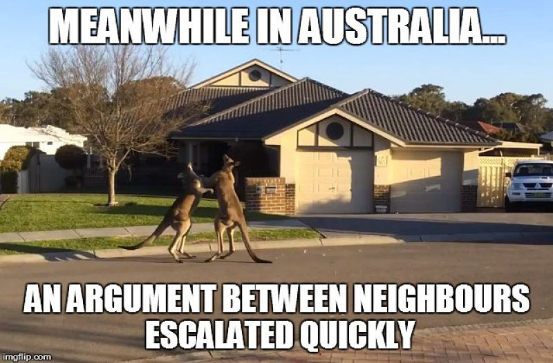 Signs you have backpacked Australia-kangaroo