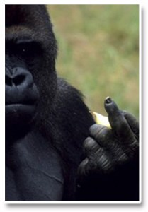 Forex_Kong_Finger