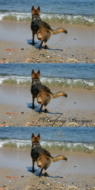 Stacked photos of a Dog on a beach