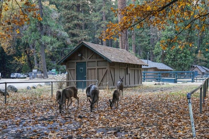Yosemite 28