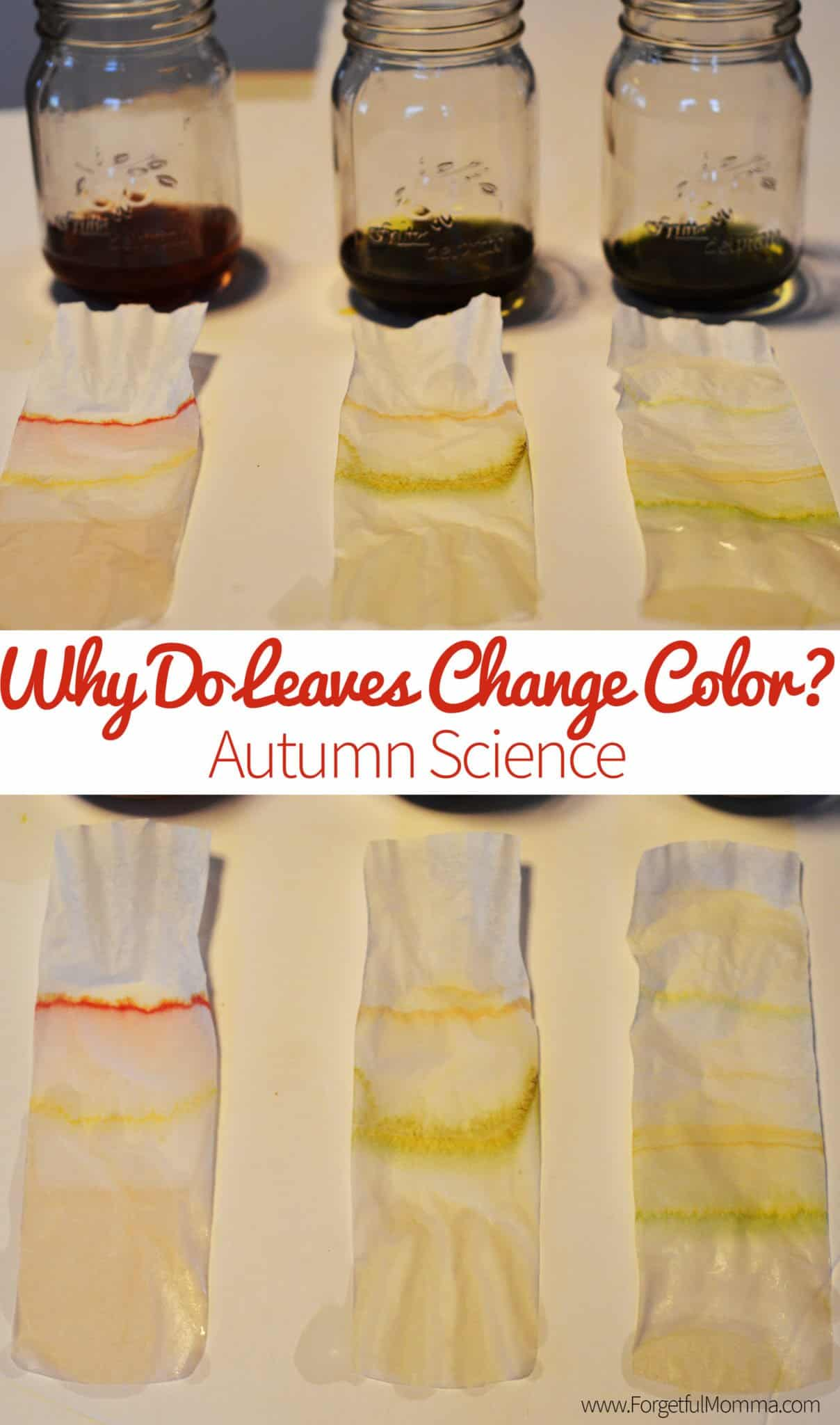 Why Do Leaves Change Color Autumn Science