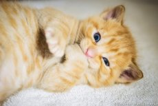 https://www.etsy.com/ca/listing/208405888/kitten-photos-set-of-3-photo-cards?