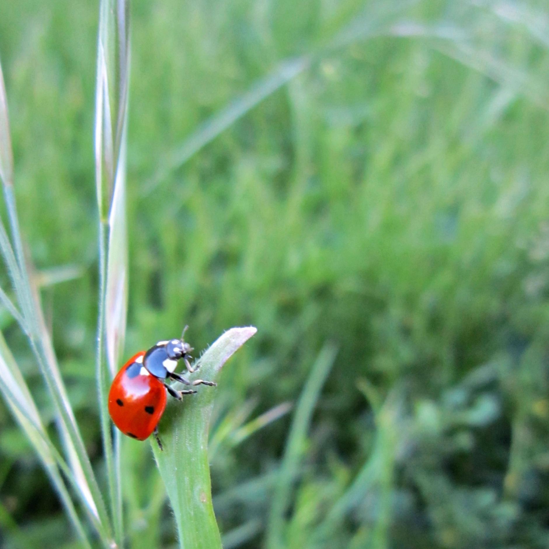 The Ladybugs Are Back