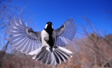 night-bird-1126076_1920-230×140