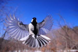 night-bird-1126076_1920-300×200