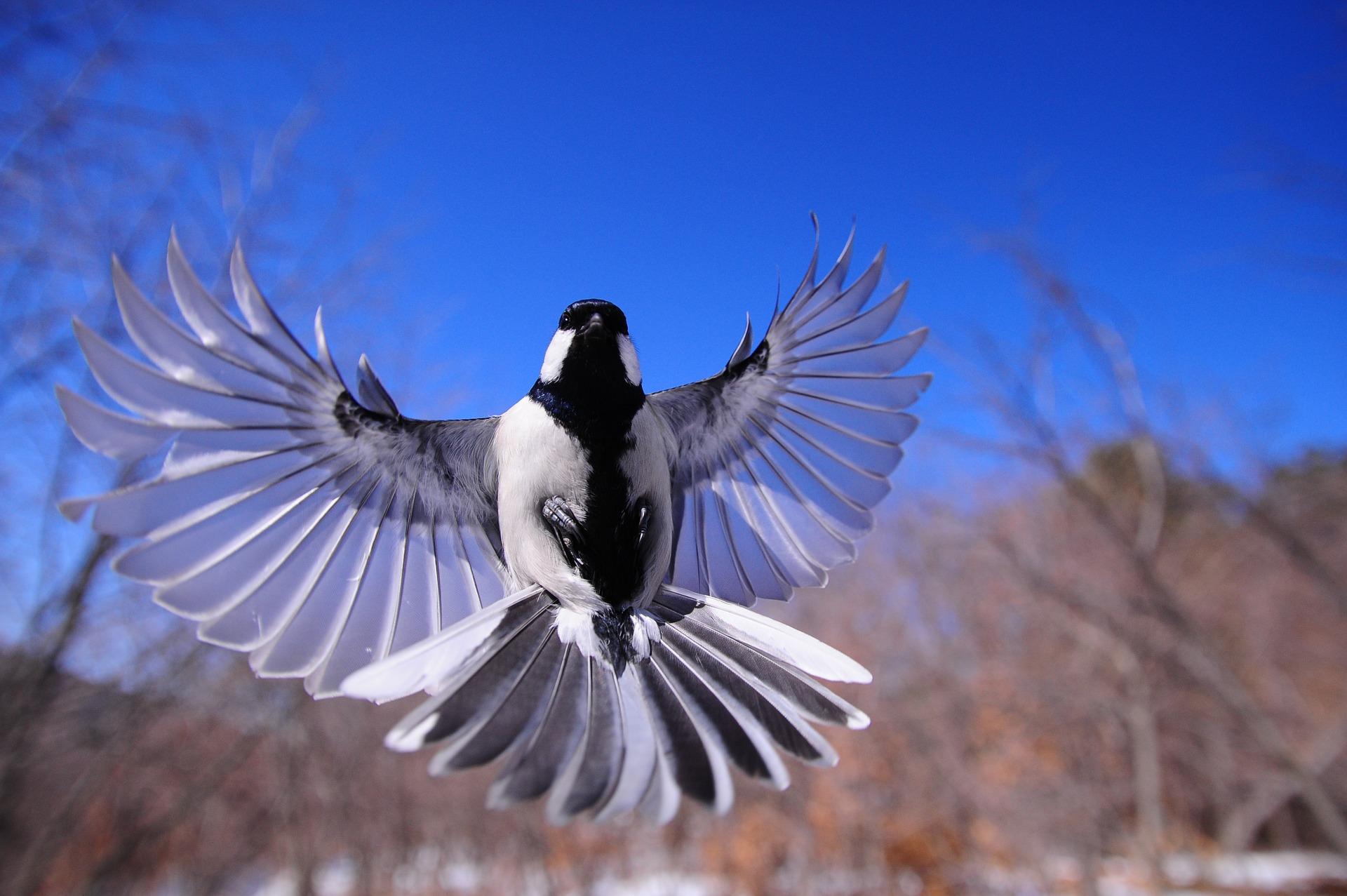 night-bird-1126076_1920