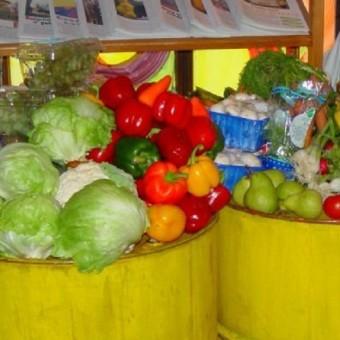 Dumpstered_vegetables-340×340