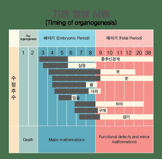 임신 중 장기 형성시점