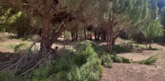 Μαραθώνας:-Η-αντιπυρική-προστασία-δεν-μπορεί-να-καταστρέφει-σπάνια-προστατευόμενα-δάση-όπως-του-Σχινιά