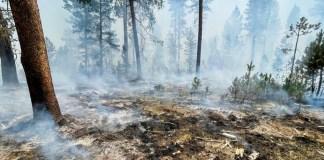 meteo-Αστεροσκοπείου:-Οι-πρόσφατες-πυρκαγιές-έκαναν-στάχτη-το-16%-των-δασών-της-Αττικής