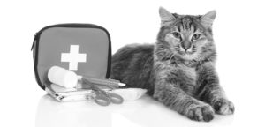 cat with first aid kit, disaster prep