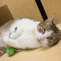 johnny angel orange tabby fat cat for kitty's sake