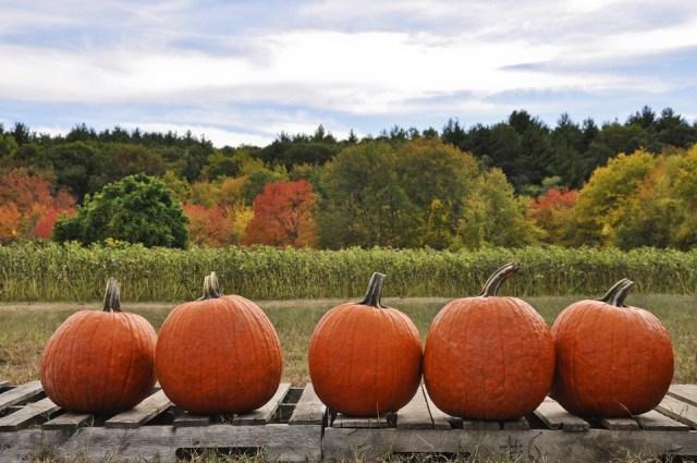 fall_pumpkins