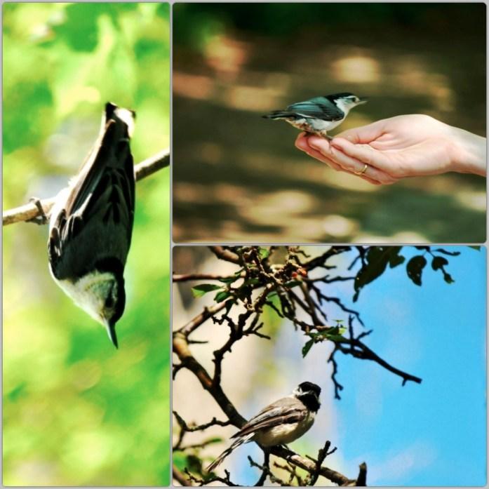 Ipswich River Wildlife Sanctuary, Audubon Society