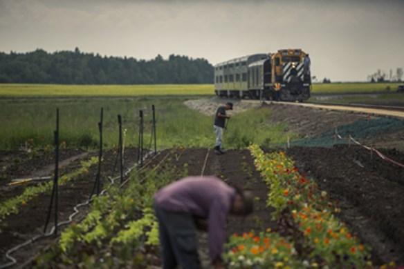 farm and train tracks s