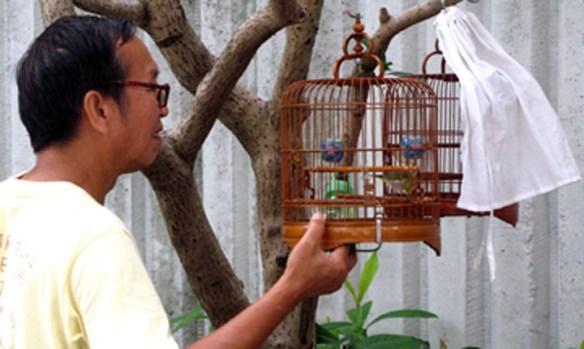 songbird contests