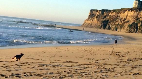 dog and beach 3 s