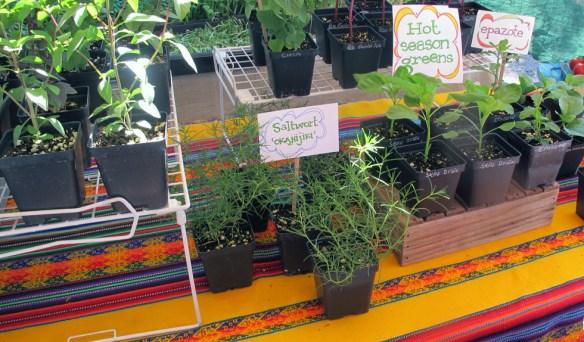 hot-season-greens-heirloom-farmers-market-tucson