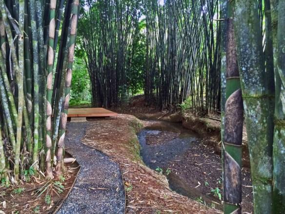 yoga platform under black bamboo Macaw Lodge Costa Rica