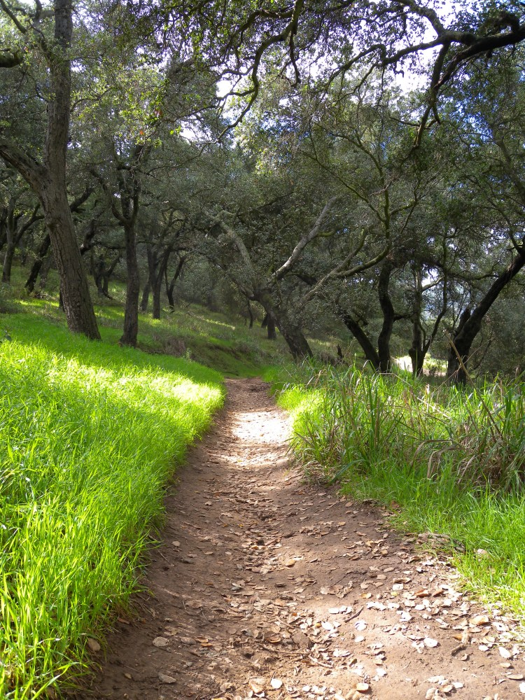 Discoveries in a New City: Hiking the Santa Monica Mountains (4/6)