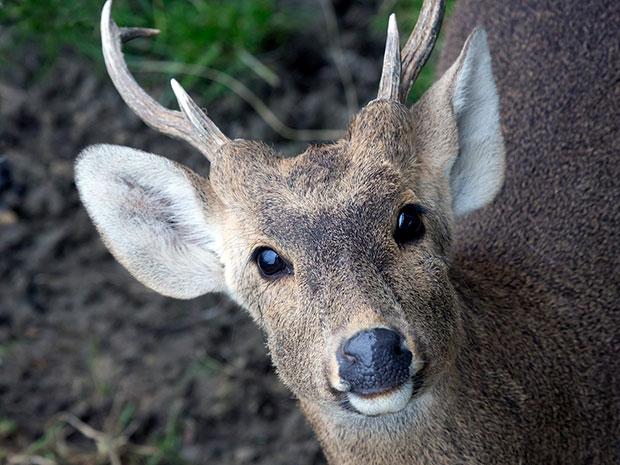 Conoce a los animales en peligro de extinción en Chile