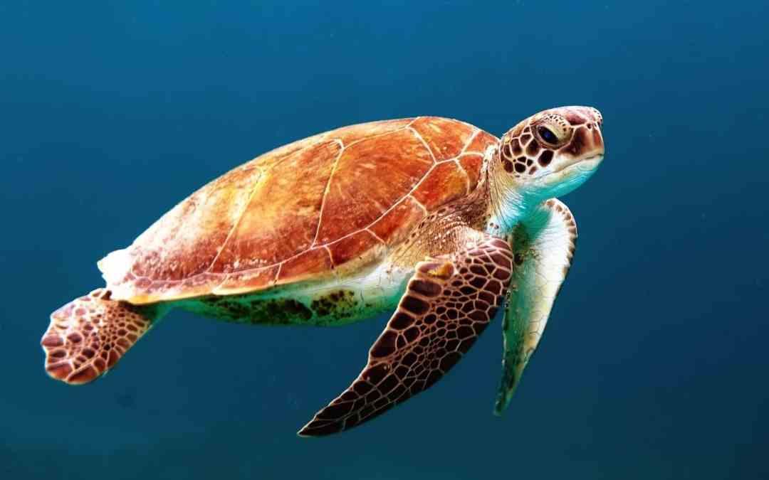 Métier écologique : Rédacteur Web