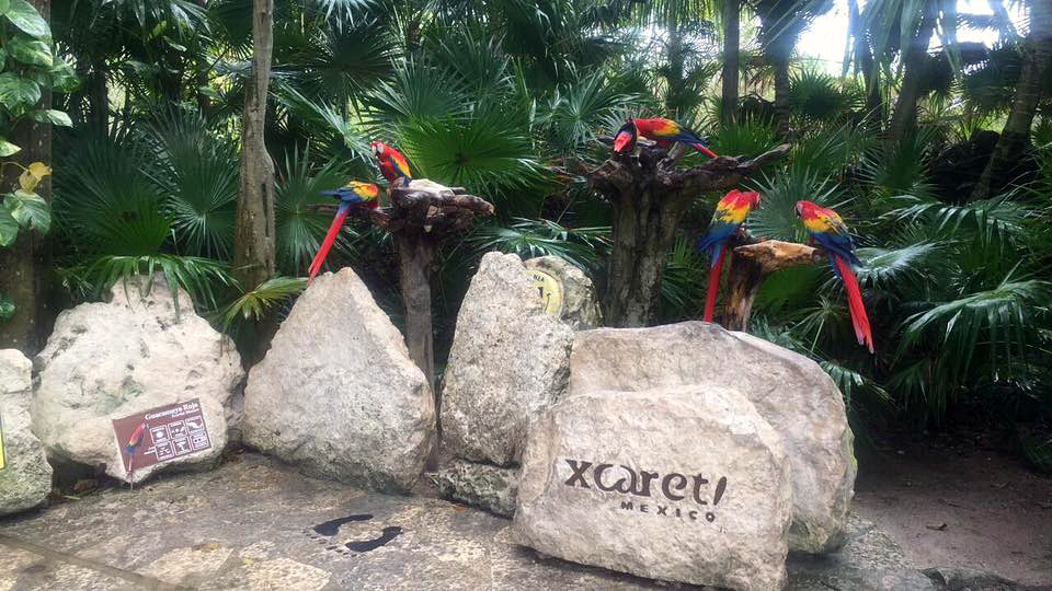 MY MEXICAN ADVENTURE | A day at Xcaret Park