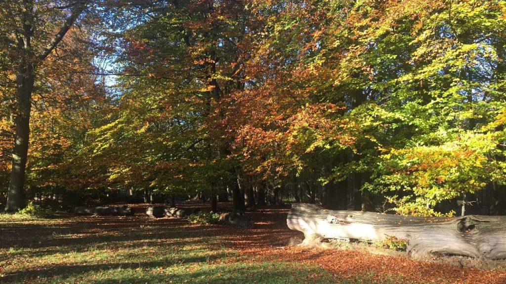 Formidable Joy | Lifestyle | Autumn | Outdoors