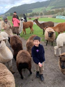 5 best things to do in Rotorua for kids. Family travel in New Zealand