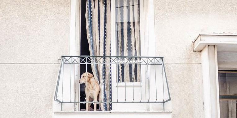 Tα Φιλαράκια: Σκύλος για το μπαλκόνι – αυτή η ντροπή