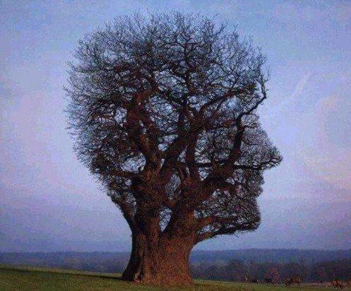 sanacion-del-arbol-genealogico