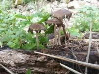 Mushrooms growing in the garden